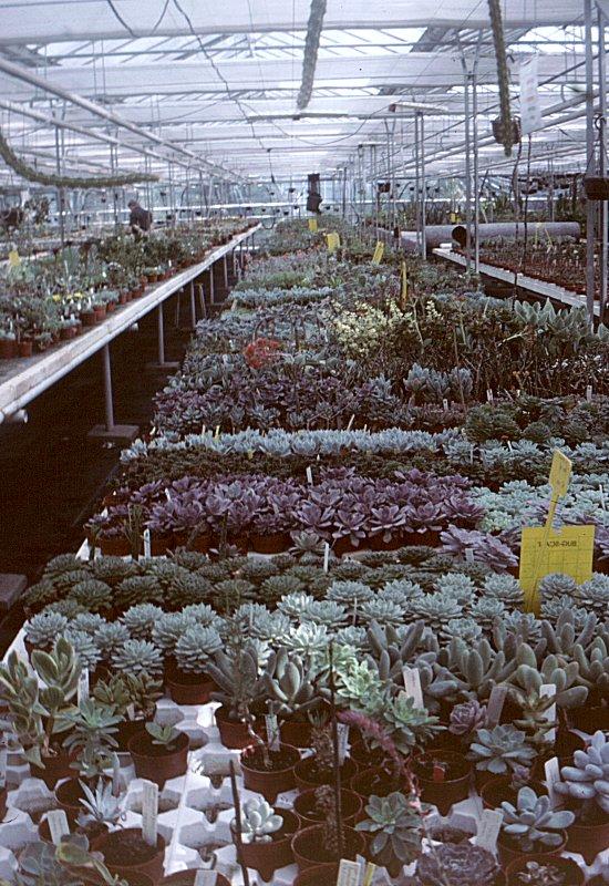 Succulent Nursery Cok Grootscholten Cactus Mall Com
